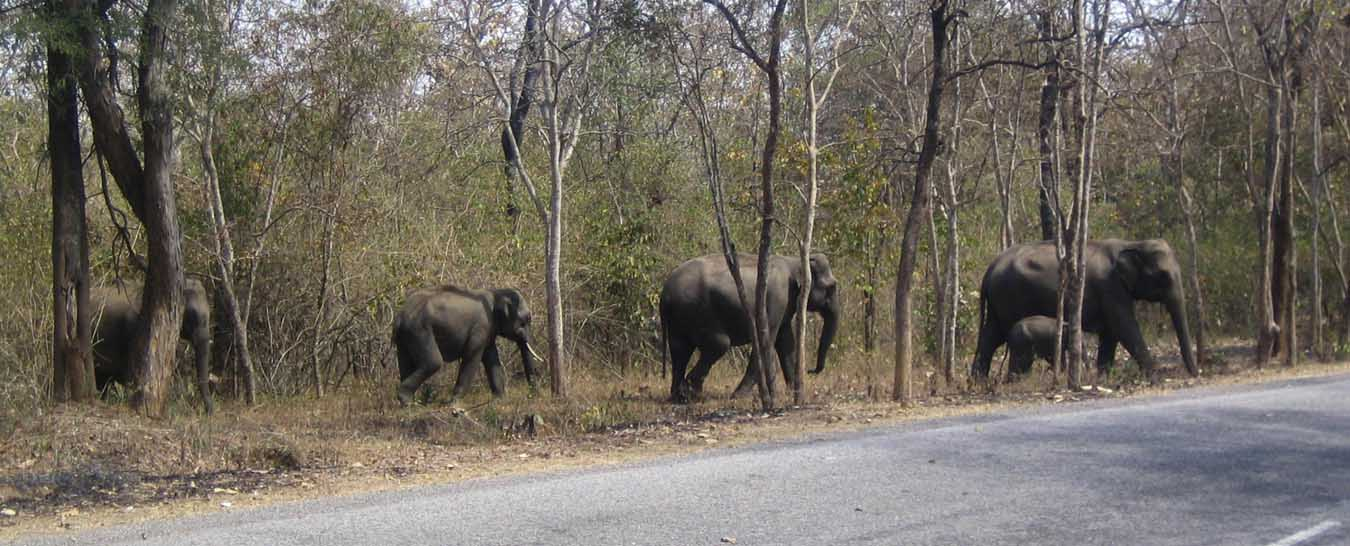 Mumbai to Wayanad Tour