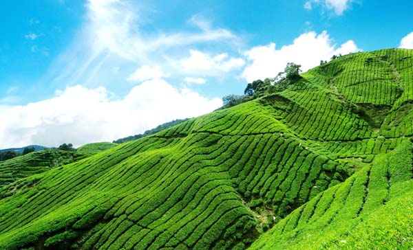Tour from Other Cities to Munnar